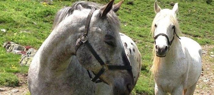 Solaria Pferde