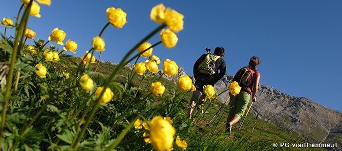 Fiemme Wandern Blumen